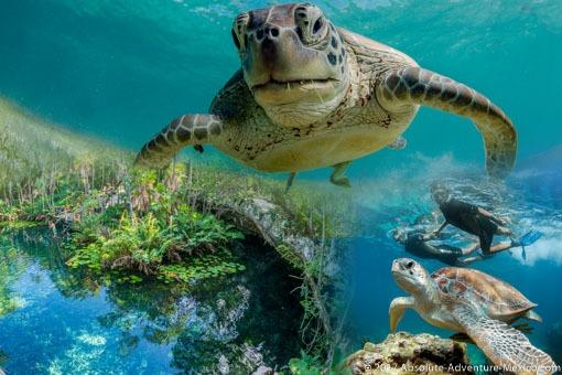 akumal-turtles-cenote-snorkeling
